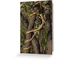 Tree versus vine Greeting Card