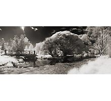 Infra-red Springtime at the Arboretum -Study No. 1 Photographic Print