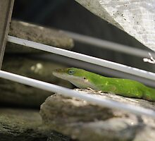 Chil-laxingShaded Anole by Okeesworld