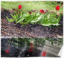 Red Flowers and Reflections Poster