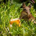 Field Mouse on Alert by George Davidson