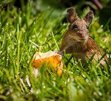 Field Mouse on Alert by Georden