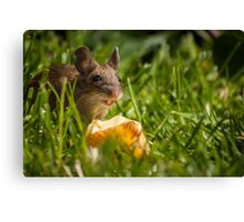 Field Mouse Eating an Apple Canvas Print