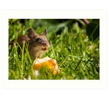 Field Mouse in the Grass Art Print