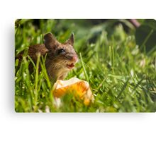 Field Mouse in the Grass Metal Print