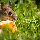 Field Mouse Posing by George Davidson