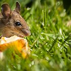 Field Mouse Posing by Georden