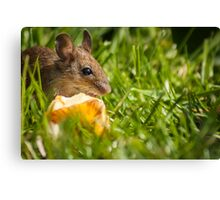Field Mouse Posing Canvas Print