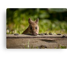 Field Mouse Watching Canvas Print
