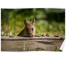 Field Mouse Watching Poster