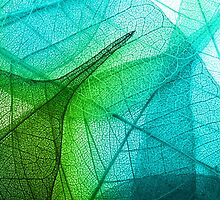 Transparent Leaf by KarterRhys