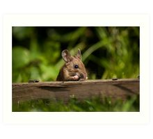Field Mouse Snack Bar Art Print