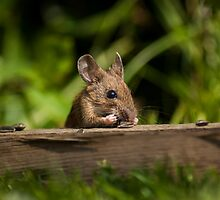 Field Mouse Snack Bar by Georden