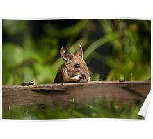 Field Mouse Snack Bar Poster