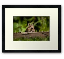 Field Mouse Eating Framed Print
