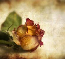 Wilted rose by Veikko  Suikkanen