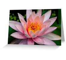 Kissed by Morning Dew Greeting Card