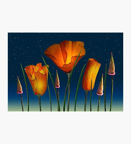 Poppies and Buds Photographic Print