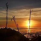 Sunset II by Heather Friedman