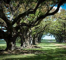 Ancient oak trees at Oak Alley Plantation, Vacherie, Louisiana, USA by PhotoStock-Isra