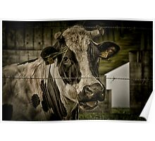 Cute cow II Poster