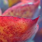 Red Spots by KEBSD123