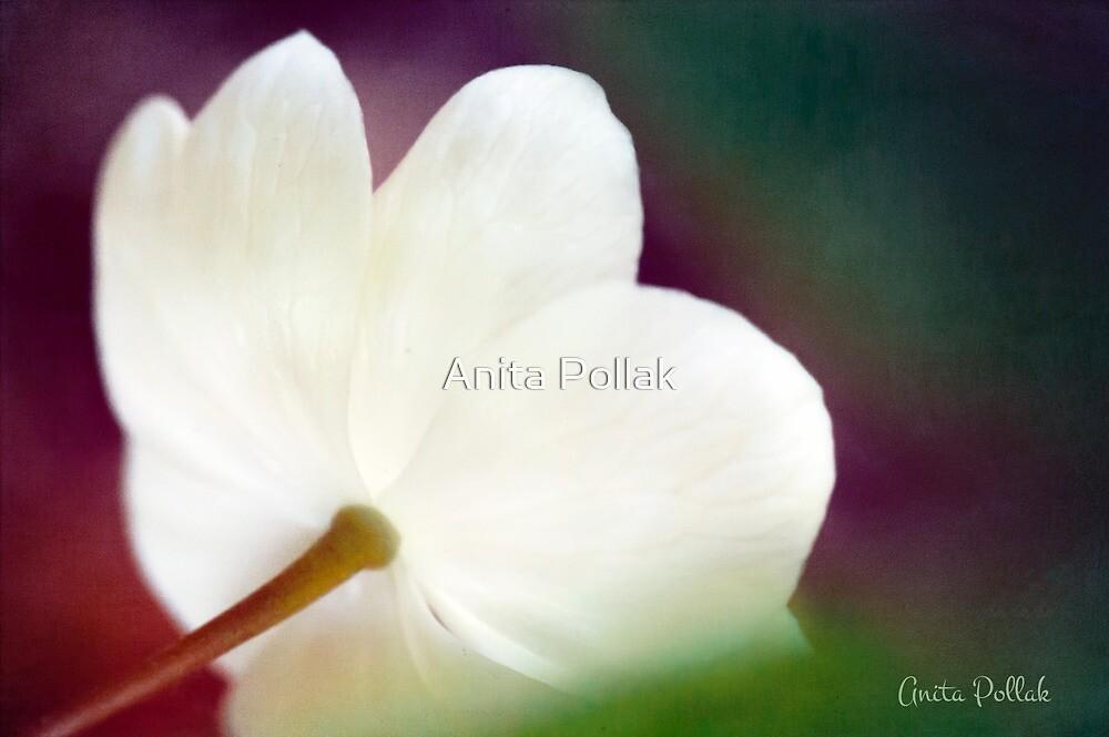 Magic Light by Anita Pollak