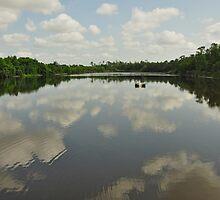 Gator Pond 6 Mile Cypress Slough  by John  Kapusta