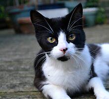 Green eyed kitten by edajwilliams