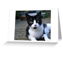 Green eyed kitten Greeting Card