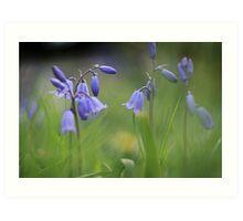 Bluebells at Downton abbey Art Print