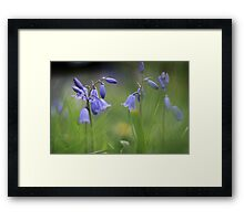 Bluebells at Downton abbey Framed Print