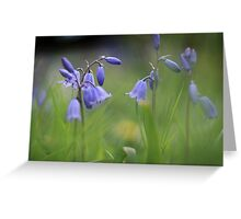 Bluebells at Downton abbey Greeting Card