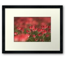 Red heads of tulips at Downton abbey Framed Print