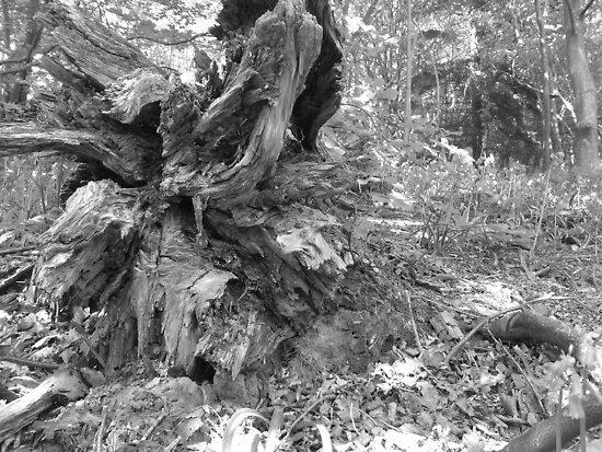 fallen tree by Miguel1995