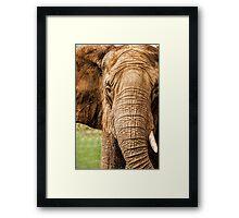 Too Big…. Framed Print