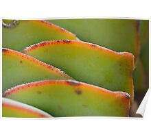 Sharp Teeth, Soft Plant Poster