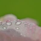Dew by KEBSD123