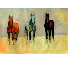 Three Horses Photographic Print
