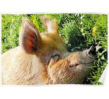 Piggy Paradise Poster