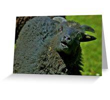 Hey Ewe!!! Greeting Card