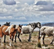 The Wild Band by Gene Praag