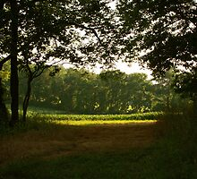 Beyond Here Lies Green by Jillian S.