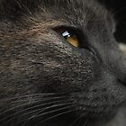 Feline Beauty by schizomania