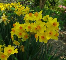 Narcissus Garden by MarianBendeth