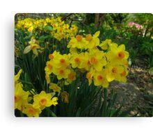 Narcissus Garden Canvas Print