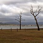 Three Trees at Lake Hume New South Wales by Pauline Tims