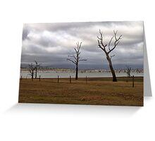 Three Trees at Lake Hume New South Wales Greeting Card