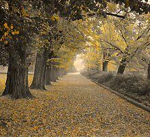 Autumn Colours by D-GaP