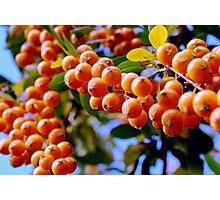 Beautiful Berries in Orange Photographic Print